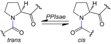 4-olide isomerase
