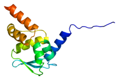 Protein ZBTB16 PDB 1buo.png