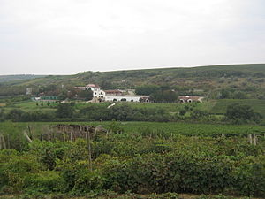 "Moldovan wine - The Purcari winery surrounded by its vineyards. The vineyard in the forefront is a ""village"" vineyard used for home-made wine"