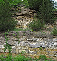 Quartzose sandstones (Jordan Sandstone, Upper Cambrian; roadcut on the northern side of Stillwater, Minnesota, USA) 1 (18354728053).jpg