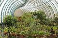 Quitos botaniska trädgård-IMG 89202.JPG