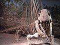 ROM Dimetrodon.jpg