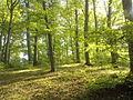 RO BV Forest 2.jpg