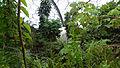 Rainforest Biome @ Eden Project (9757496944).jpg