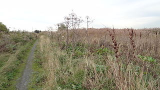 Rainham Marshes Nature Reserve marshland nature reserve in east London
