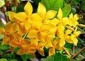 Rangan flowers.jpg