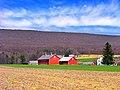 Red barns in a field in rural Pennsylvania, U.S.A.jpg