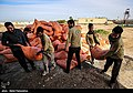 Relief to Flood-affected ranchers by the Barakat Foundation & Basij03.jpg