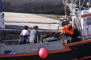 Retour de la pêche à la seiche du fileyeur Jason IV (21).JPG