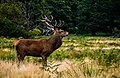 Richmond Park, Richmond, United Kingdom (Unsplash).jpg