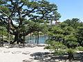 Ritsurin Pines.jpg