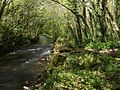 River Avon in Woodleigh Wood - geograph.org.uk - 1297112.jpg