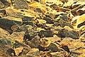 Rocks (182327969).jpeg