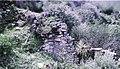 Ruinas de Quillahuaca un pequeño alamacen de comida.jpg