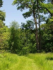 rutgers gardens wikipedia