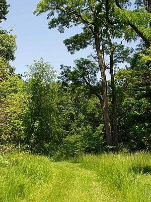 Rutgers Gardens - Helyar Woods