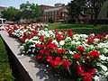 Rutgers University flowers walkway red white near dormitories and classroom buildings.jpg