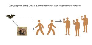SARS-CoV-1 - Übergang auf den Menschen.png
