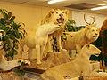 STUFFED LIONS 2.jpg
