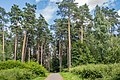 Sakaliny local biological reserve p05.jpg