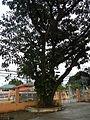 SanJuan,Batangasjf9354 08.JPG
