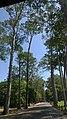Sangkat Nokor Thum, Krong Siem Reap, Cambodia - panoramio (68).jpg