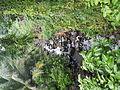 Sariaya,Quezonjf9733 19.JPG