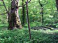 Schlosspark Lanke 02.jpg