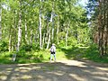 Schoenheide - Waldweg - geo.hlipp.de - 37409.jpg