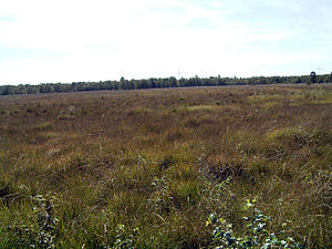 Floating mat - Silted up raised bog kolk with floating mat that is unsafe to walk on