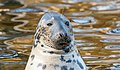 Seal Image 2.jpg