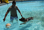 Security Forces conducts K-9 water training 130910-F-SY464-068.jpg
