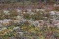 Seenemets 1 - panoramio.jpg