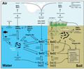 Selenium pathways and transformations.png