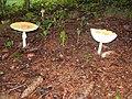 September Morning in Monmouth Junction, New Jersey. September 28,2008 - panoramio - Gary Miotla.jpg