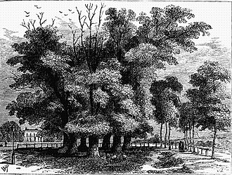 Seven Sisters, London - The Seven Sisters in 1830