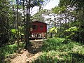Shack--in-forest-alto-quepos-mountains-southern-costa-rica.jpg