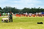 Sheep Dog Display (2620993483).jpg