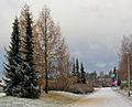 Siberian larch - Siperianlehtikuusi, Sibirisk lärkträd cropped C.JPG