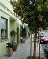 Sidewalk in Half-Moon-Bay California.jpg