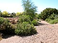 Siphon Draw Wash Near Shotgun Court in Apache Junction - panoramio.jpg