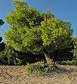 Sithonia, Greece - panoramio (15).jpg