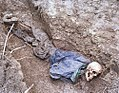 Skeleton found during grave exhumation at Konjevići.jpg