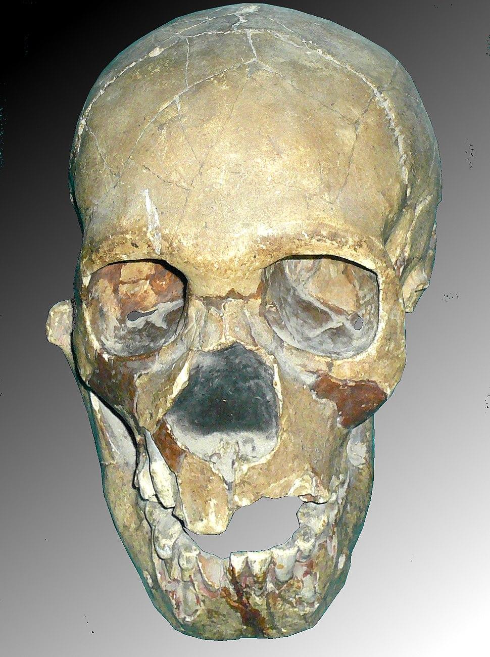 Skull of Teshik-Tash Boy