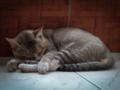Sleeping Cat.png