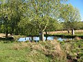 Small pond in Richmond Park - geograph.org.uk - 1273784.jpg