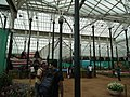 Snap from Lalbagh Flower Show Aug 2013 8128.JPG