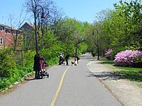 Somerville Community Path. 05.jpg