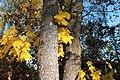 Southwest Finland, Finland - panoramio (13).jpg