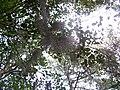 Spanish moss (5816336837) (2).jpg
